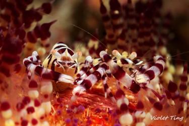 一家人. Coleman Shrimps with eggs