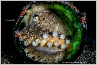瓶中的章鱼