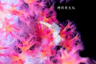 ImagePress Image58b8caf287896