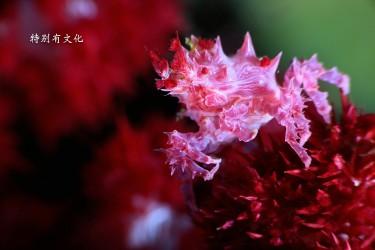 ImagePress Image58b8ca02ab19e