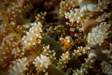 The Squat shrimp forest hide