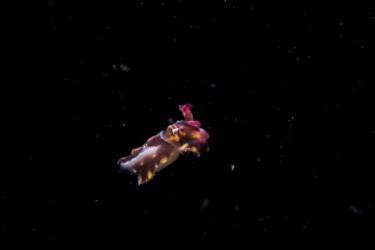 飞向外太空