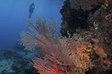 Reef in Raja Ampat