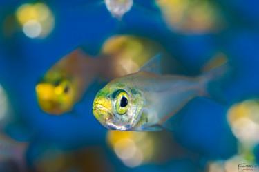 Glass fish bokeh
