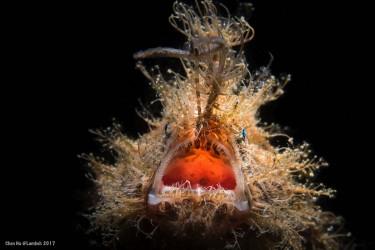 深海大怪物