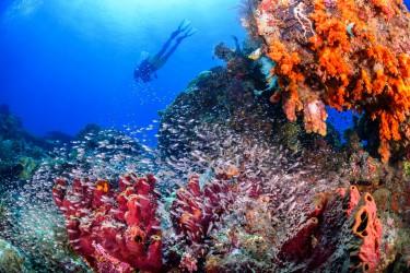 玻璃鱼群与潜水员