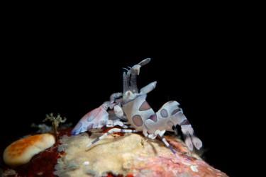 油膜虾-仰望