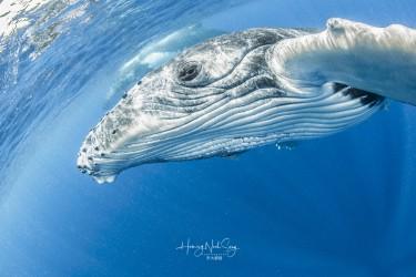 小鲸鱼爱自拍