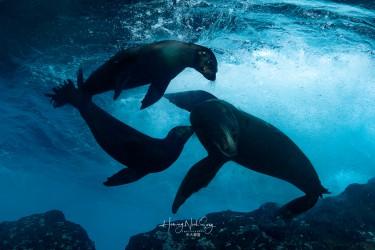 海狗和海狮