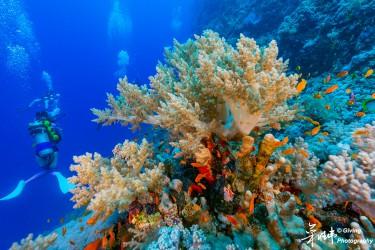 埃及红海珊瑚礁