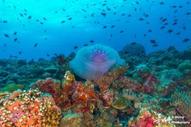 水母与珊瑚礁