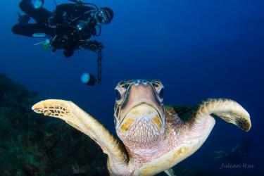Naughty turtle