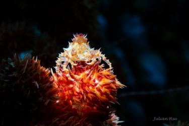 Candy Crab
