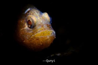 cardinale fish