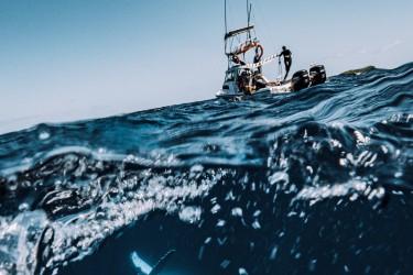 幼年鲸鱼喜欢和船玩耍,也许把船当成了妈妈