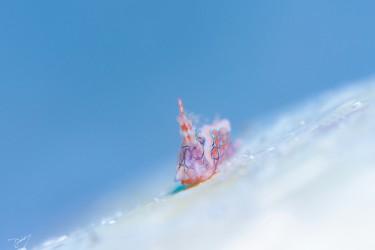 圣诞老人在滑雪