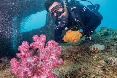 棘穗软珊瑚